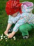 Het plukken bloemen Stock Foto's