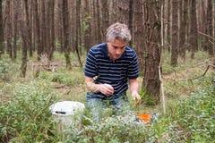 Het plukken bosbessen royalty-vrije stock afbeelding