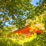 Het plukken door esdoornbladeren bij gouden uur aan een kleurrijk gebouw bij Kiyomizu-tempel royalty-vrije stock afbeelding