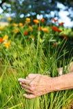 Het plukken gras Royalty-vrije Stock Afbeelding