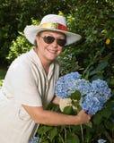 Het plukken het Gewas van Hydrangea hortensia's Royalty-vrije Stock Foto