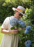 Het plukken Hydrangea hortensia's in de Gard Royalty-vrije Stock Foto's