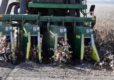 Het plukken katoen met een katoenen plukker, oogstenkatoen met een katoenen jenever royalty-vrije stock foto