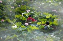 Het plukken Lotus Stock Foto