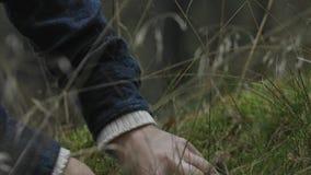 Het plukken mashroom van gras stock videobeelden