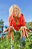 Het plukken organische wortelen Stock Foto's