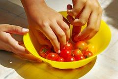 Het plukken tomaten Stock Foto's