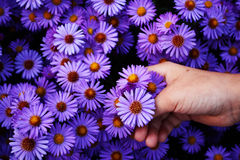 Het plukken van de bloem Royalty-vrije Stock Afbeelding