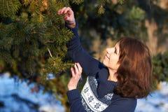 Het plukken van een Kerstboom stock afbeelding