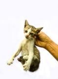 Het plukken van een verdwaalde kat Stock Fotografie