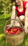 Het plukken van het fruit Stock Afbeeldingen