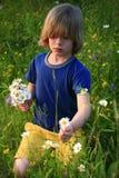 Het plukken van het kind wildflowers Stock Foto's