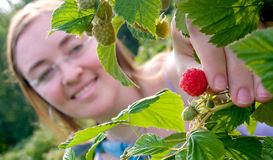 Het plukken van het meisje aardbeien Stock Fotografie