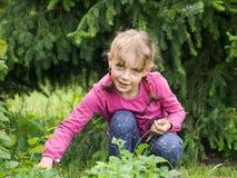 Het plukken van het meisje aardbeien Stock Foto