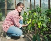 Het plukken van het meisje groene paprika in het hete huis Stock Foto's