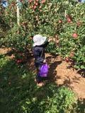 Het plukken van kinderenapple in de Herfst stock foto