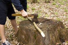 Het plukken wijnstokken van hazelaar in de bomen van de de lente boskarbonade met een bijl stock afbeeldingen