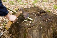 Het plukken wijnstokken van hazelaar in de bomen van de de lente boskarbonade met een bijl stock afbeelding