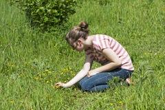 Het plukken wildflowers Stock Foto