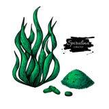 Het poederhand getrokken vectorillustratie van het Spirulinazeewier De geïsoleerde algen, het poeder en de pillen van Spirulina stock illustratie