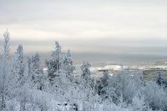 Het polaire landschap van de Winter stock foto