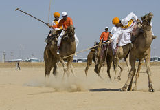 Het Polo van de kameel Stock Foto