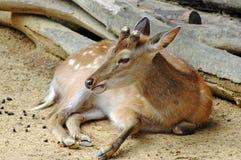 Het portret van Bambi royalty-vrije stock afbeelding