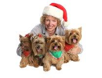 Het Portret van de Familie van Yorkie van Kerstmis Stock Afbeeldingen