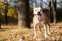 Het portret van de gelukhond, onduidelijk beeldachtergrond royalty-vrije stock fotografie