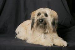 Het Portret van de hond Royalty-vrije Stock Afbeelding
