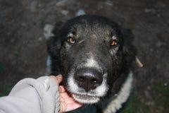 Het portret van de hond Royalty-vrije Stock Foto