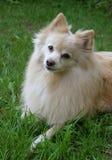 Het Portret van de hond stock foto's