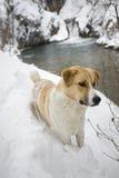 Het portret van de hond Stock Foto