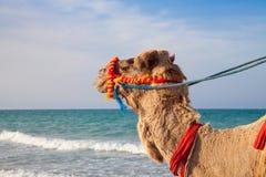 Het portret van de kameel met overzeese achtergrond royalty-vrije stock afbeeldingen