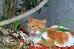 Het portret van de kat stock afbeeldingen