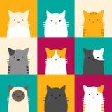 Het portret van de kat Royalty-vrije Stock Afbeelding
