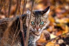 Het portret van de kat van de gestreepte kat in de herfst Stock Foto