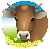 Het portret van de koe Royalty-vrije Stock Afbeeldingen