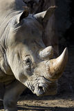 Het portret van de rinoceros royalty-vrije stock foto