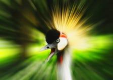Het portret van de vogel Royalty-vrije Stock Foto's
