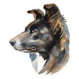 Het portret van de waterverfhond van border collie, close-up op een witte achtergrond, met elementen van druppels en verf ploeter royalty-vrije illustratie