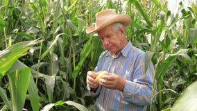 Het portret van een Bejaarde Landbouwer Eats Corn And toont een Grote Duim stock videobeelden