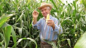 Het portret van een Bejaarde Landbouwer In Hat Smiling houdt het Graan en verschijnt O.K. stock video