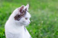 Het portret van een witte kat tegen een achtergrond van groen gras, kat ziet aside_ eruit royalty-vrije stock foto's