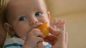 Het portret van het charmeren van baby eet een abrikoos stock footage