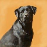 Het portret van het olieverfschilderij van zwart Labrador mannetje Royalty-vrije Stock Afbeelding
