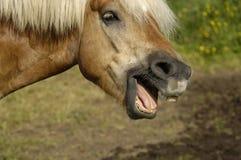 Het portret van het paard Stock Fotografie