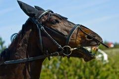 Het portret van het paard in aard stock afbeeldingen