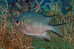 Het portret van het vissenprofiel Royalty-vrije Stock Foto's
