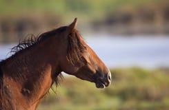 Het portret van het wild paard Royalty-vrije Stock Afbeeldingen